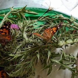 Von der Raupe zum Schmetterling – Klasse 2c